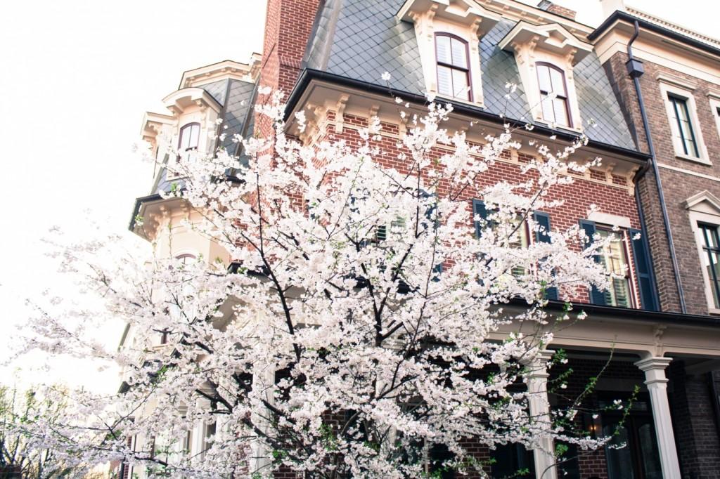 Cherry Blossom Festival-1