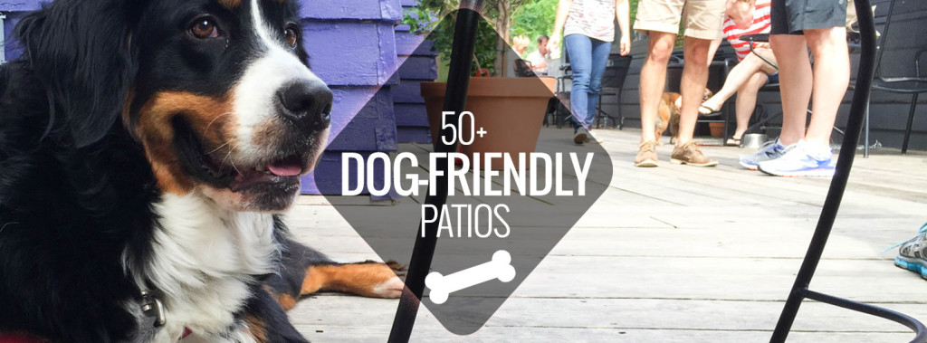 dog-friendly-patios