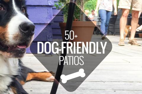 dog-friendly-patios