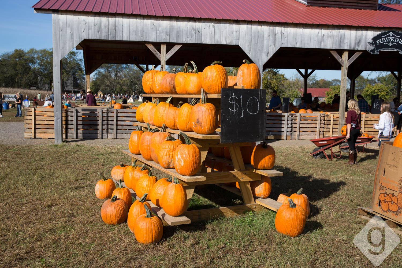 Pumpkin Patches, Corn Mazes, & Hay Rides | Nashville Guru